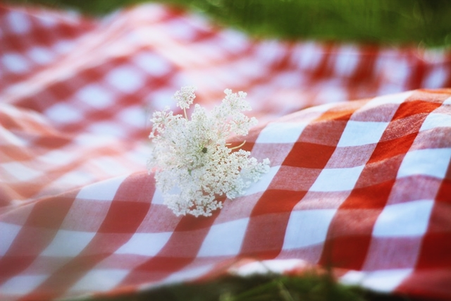 Summer day, red checkered picnic blanket, milkweed flower